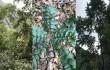 新發現!上饒發現3種國家Ⅱ級保護樹種