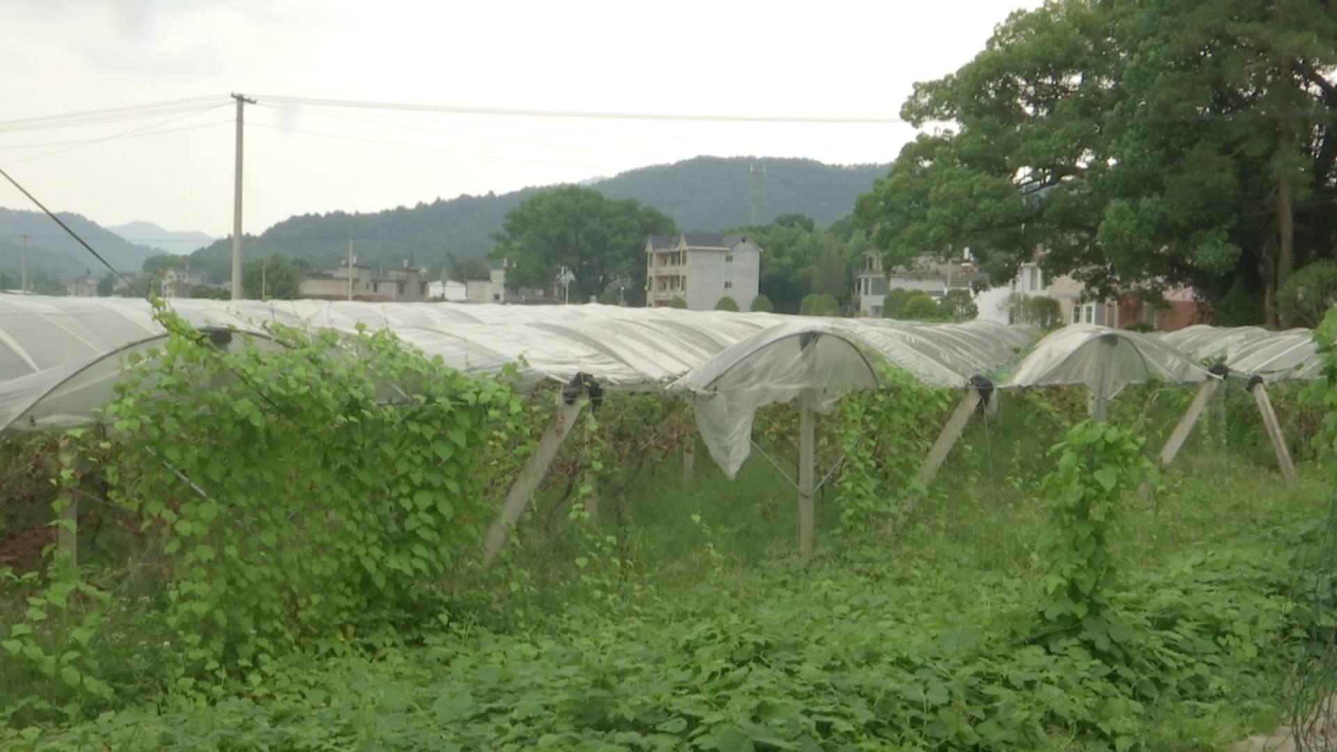 农民工急需被拖欠的工资 当地政府承诺马上协调