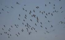 注意!一大波越冬候鸟要来鄱阳湖湿地了