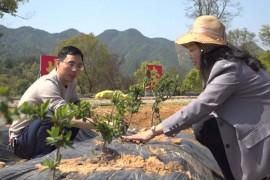 上饶:科技助力中药材种植提质增效