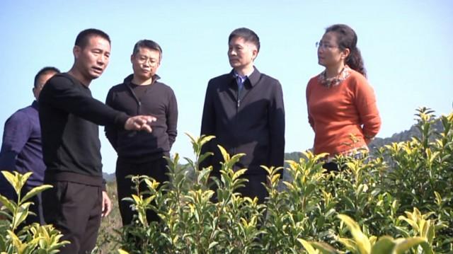 产业结构优化,真正让一片叶子富裕一方百姓,让小小茶叶助力乡村振兴.图片